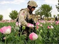 Overdue Wisdom in Afghanistan