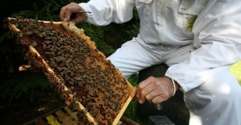 Why Congress Should Care About the Beepocalypse