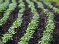 How Sustainability Should Shape the American Diet