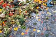 Pile of rotting fruit and vegetables near water