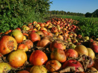 The Carbon Footprint of Wasted Food
