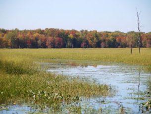 Vermont Wetlands Management