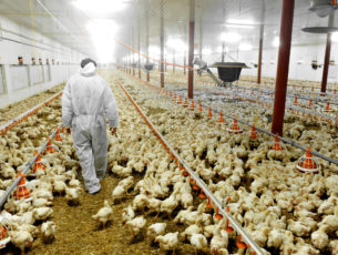 Time to Divest from Factory Farming
