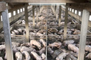 It's Time to Shut Down Industrial Animal Farming