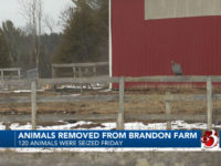 Animal Welfare in Rutland County