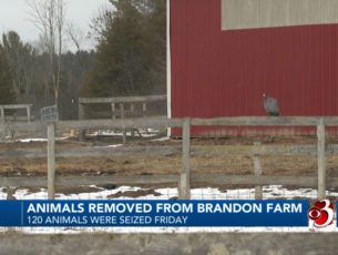 Animal Welfare in Rutland County
